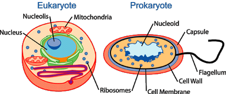 File:Cell types.png