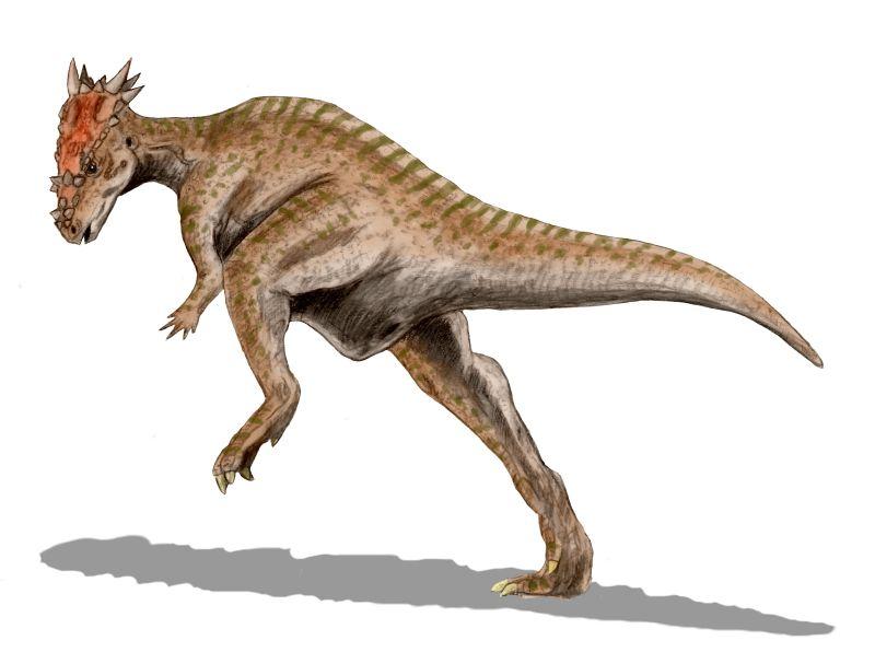 File:Pachycephalosaur Dracorex sp.jpg