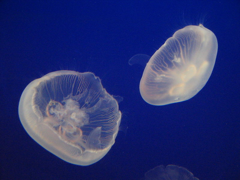 komochki-v-sperme-zheleobraznie