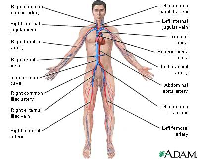 Circulatory system - CreationWiki, the encyclopedia of creation science