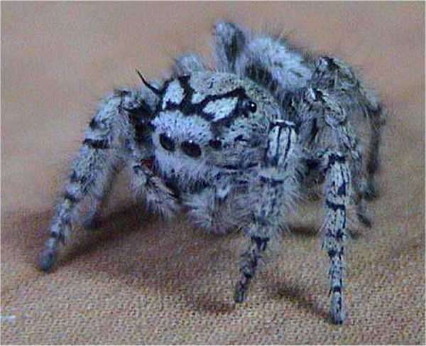 File:Jumping spider.jpg
