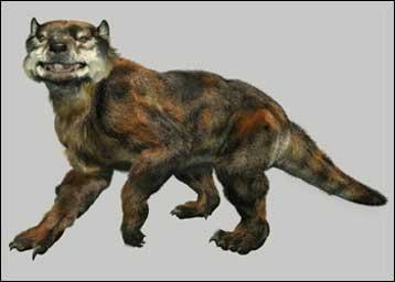 Marsupial lion 'stalks' Tweed NOT everyone is... - Cryptid ...