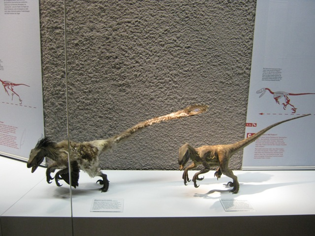 File:Deinonychus with feathers and without.JPG
