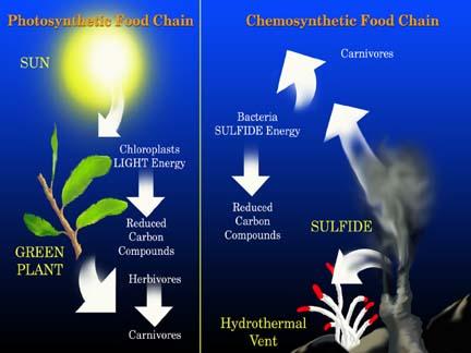 File:Chemosynthesis.jpg