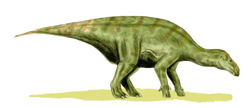 File:Iguanodon bernissartensis.jpg