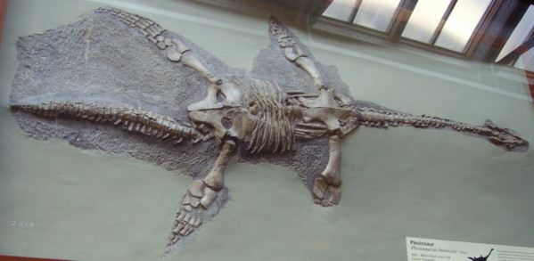 File:Plesiosaurus hawkinsi NHM.jpg