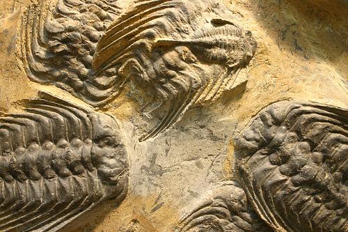 File:Trilobites .jpg