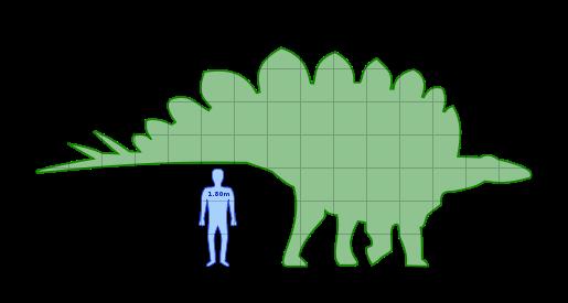 File:Stegosaurus size.png