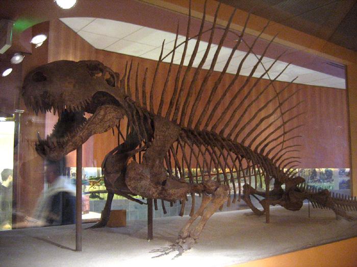 File:Dimetrodon skeleton.jpg