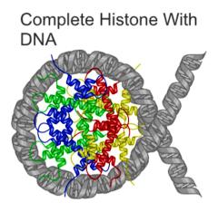 how to detect histone present on chromatin