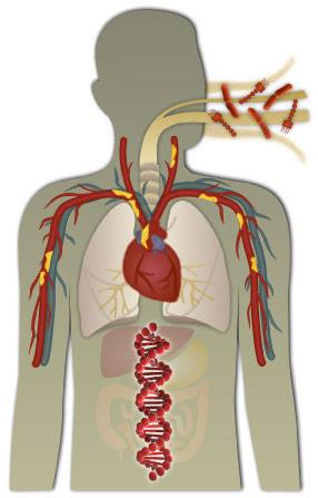 Human physiology.jpg