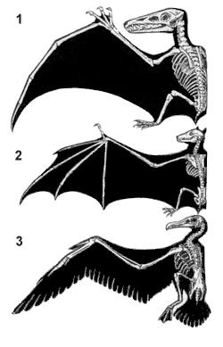 Winged animal homology.jpg