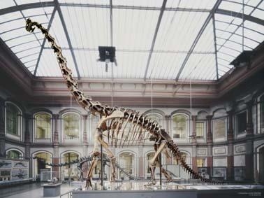 File:Brachiosaurus skeleton.jpg