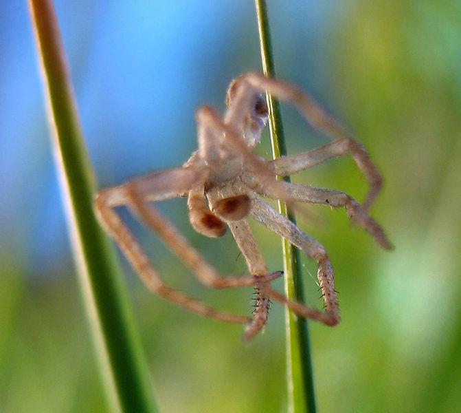 File:Spider-skin.jpg