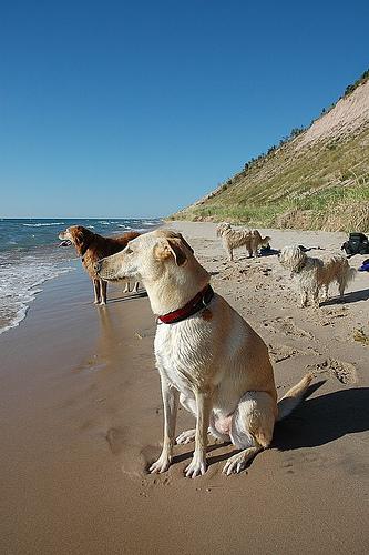 File:Dog varieties.jpg