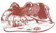 Ceratosaurus nasicornis.png