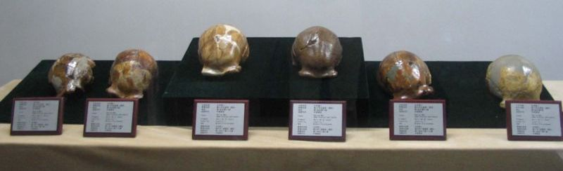 File:Peking Man Skulls.jpg