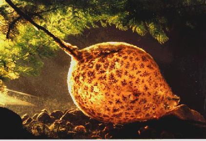File:Bryozoa.jpg
