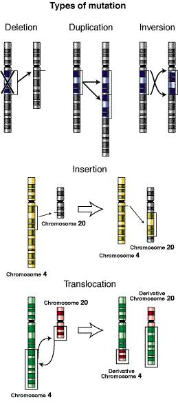Types of mutation.JPG