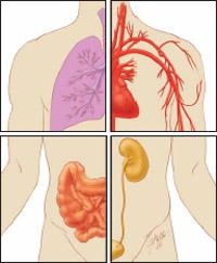 Biological system.jpg