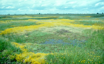 VernalPool.jpg