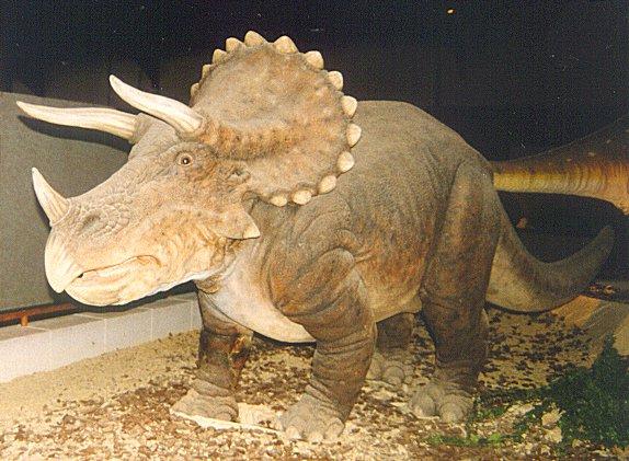 File:Triceratops brussels.jpg