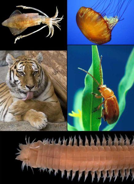 File:Animal diversity.jpg