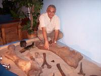 Csi-fossils.jpg