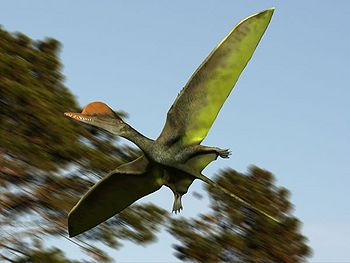 Darwinopterus.jpg