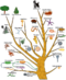 Evolution tree of life.png