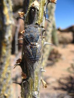 Hemiptera3.jpg