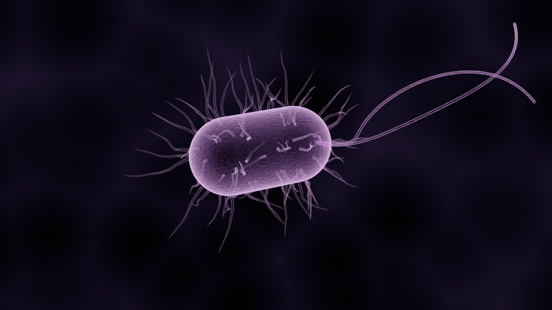 File:Pathogenic Bacteria.png