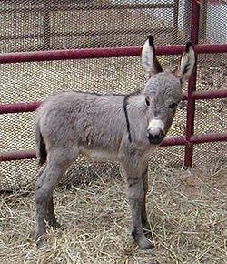 Baby donkey.jpg