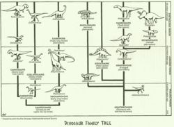 Dino family tree.jpg