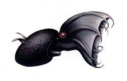 Vampiresquid2.jpg
