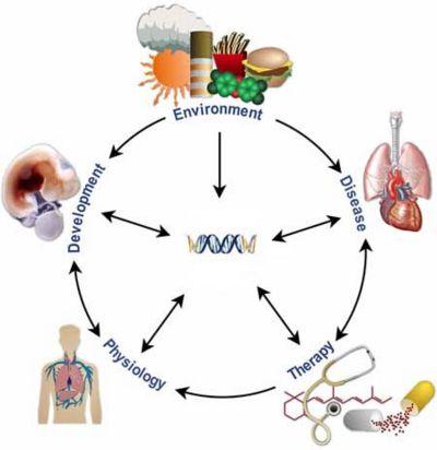 Genetic effectors.jpg