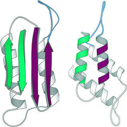 Prion structure