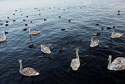 A bird flock.jpg