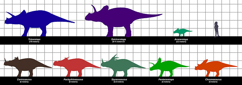 File:Ceratopsian sizes.JPG