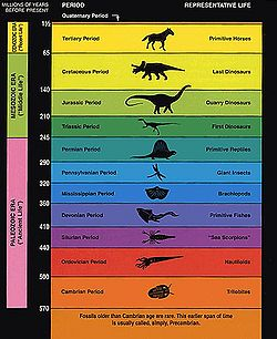Geologic ages as interpreted by the fossil record.