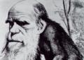 Darwin ape small.png