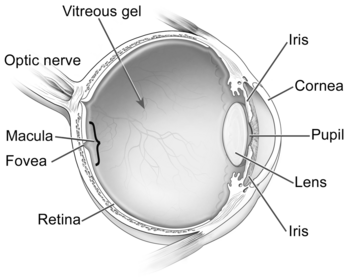 Eye diagram.png