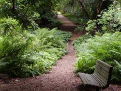 Strybing Arboretum trail.jpg