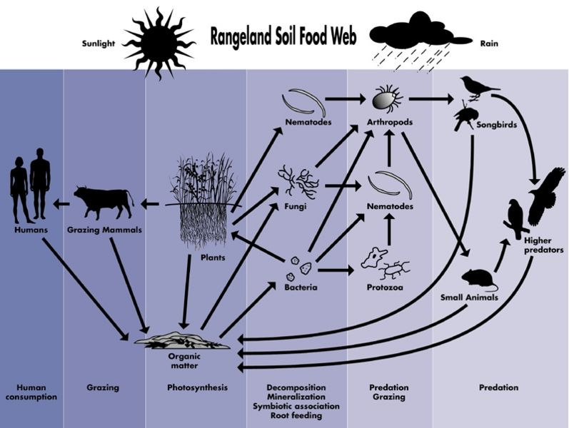 File:Rangeland soil food web1.JPG