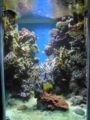 450px-Aquarium-Monaco1.jpg