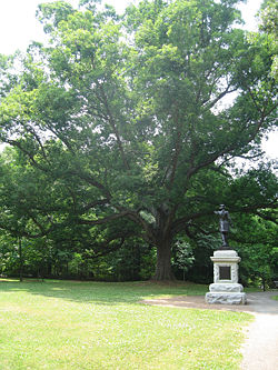 Oak tree 3.jpg