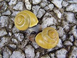 Un amour d'escargots.jpg