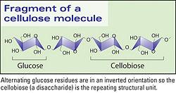 Cellose molecule.jpg