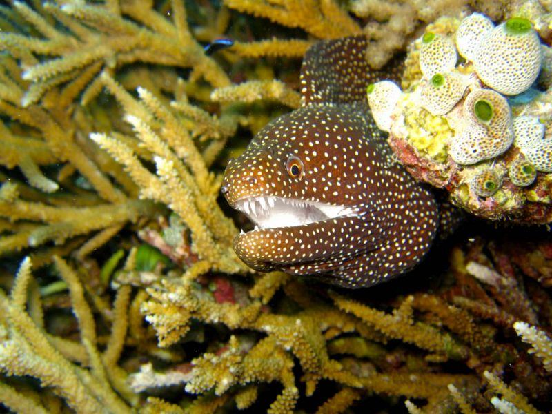 File:Moray eel.jpg