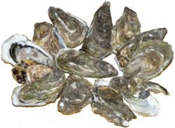 800px-Pacific oysters 01 .jpg
